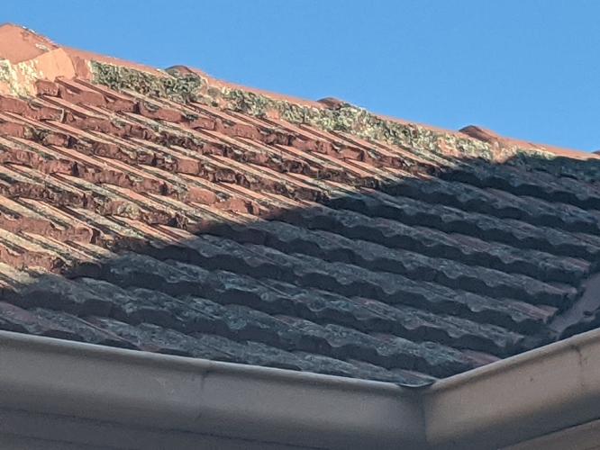 lichen on roof
