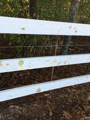 Fence Part 3 110619 (7)