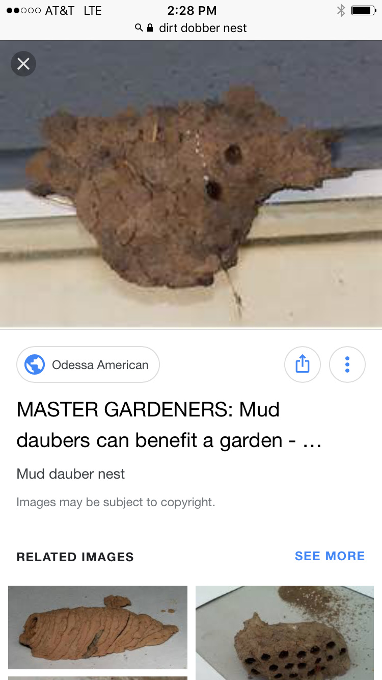 Best Methods Of Getting Dirt Dobber Nest Off Houses Stains