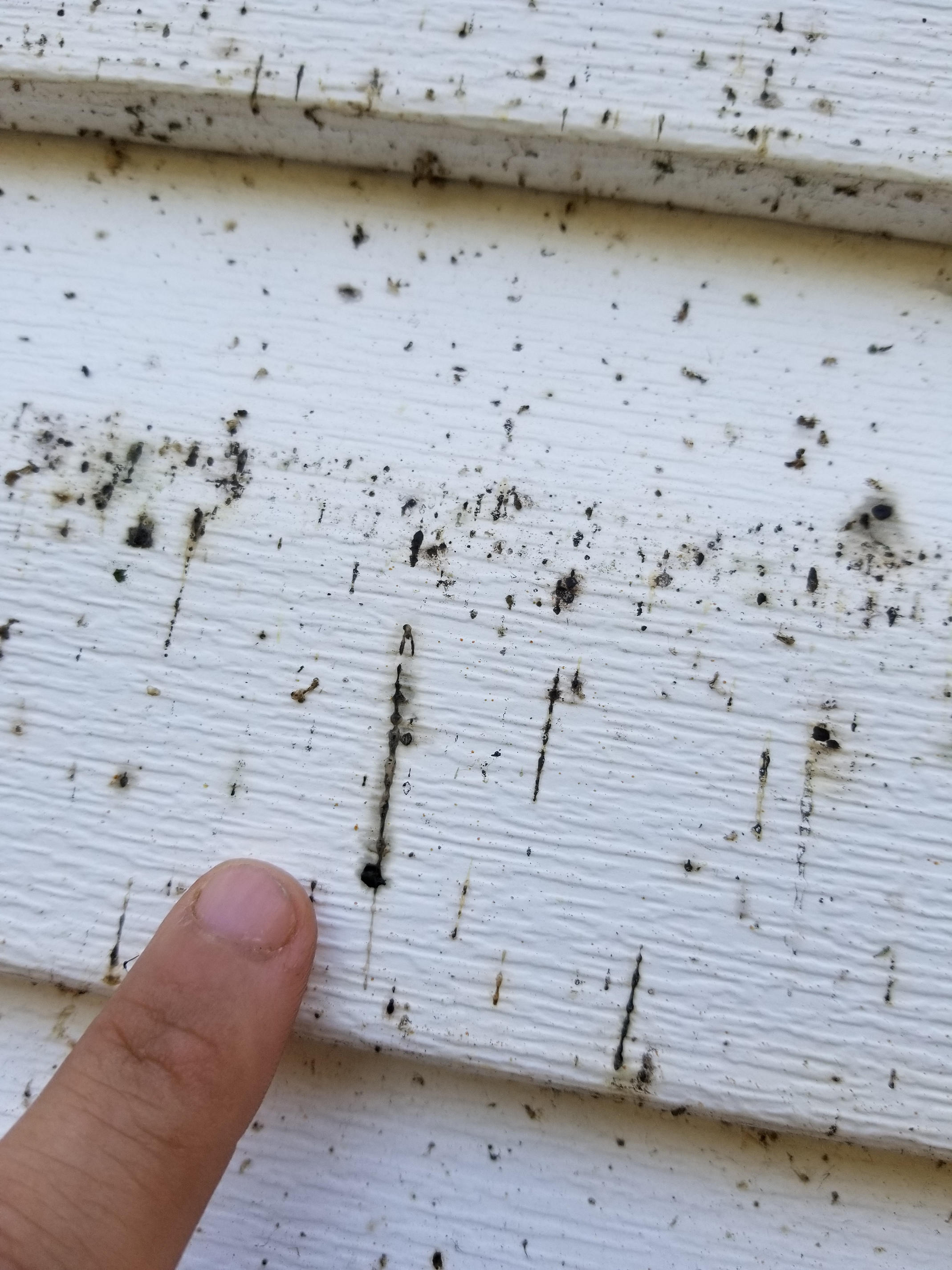Spider Droppings Residential Pressure Washing Resource